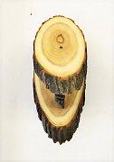 Podložka muflon akát